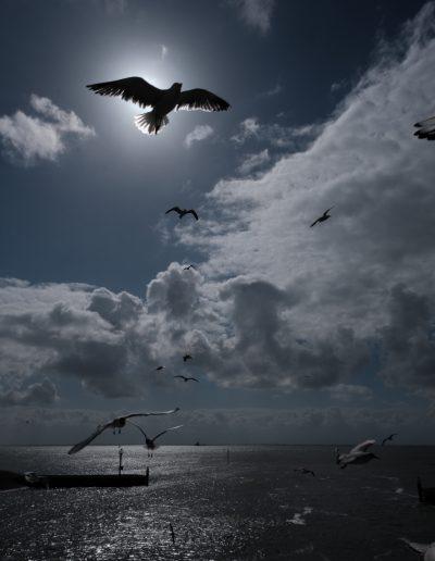 15-sunnybirds-blackartcz0