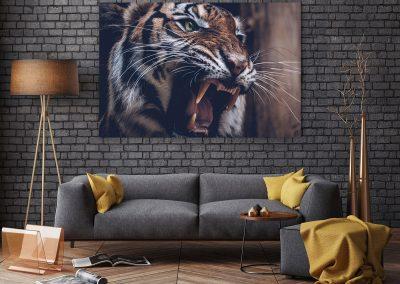 tygr-nahled